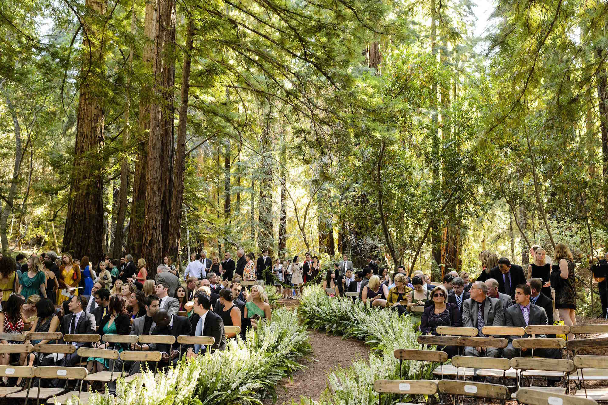 Forest wedding under large redwood trees