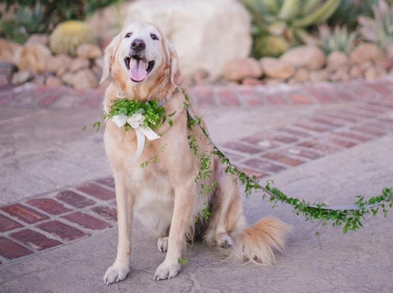 dog with leash of greenery