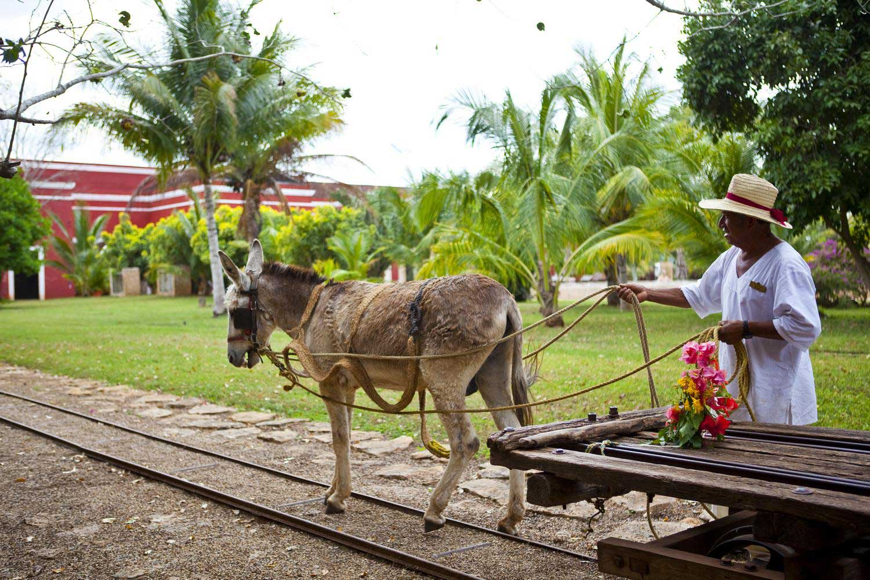 Hacienda Temozon grounds and donkey