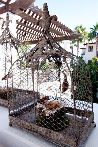 chicken-wire-bird-cages-with-bird-nests-inside