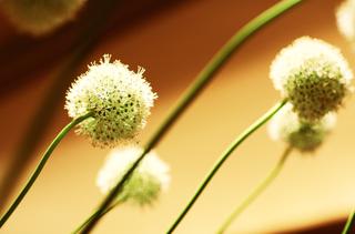 long-stemmed-green-flowers