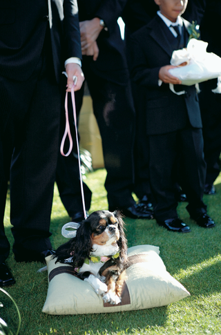 dog-rests-on-pillow-during-ceremony