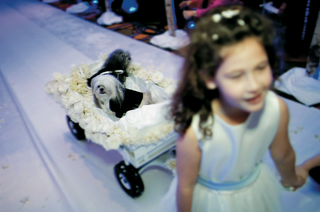 little-hairy-dogs-in-a-white-rose-wagon