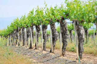 wine-vineyard-in-temecula-california