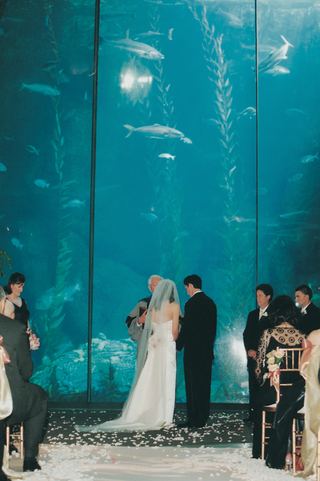 bride-and-groom-get-married-in-front-of-large-aquarium