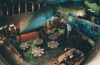 reception-tables-beneath-giant-blue-whale-replica