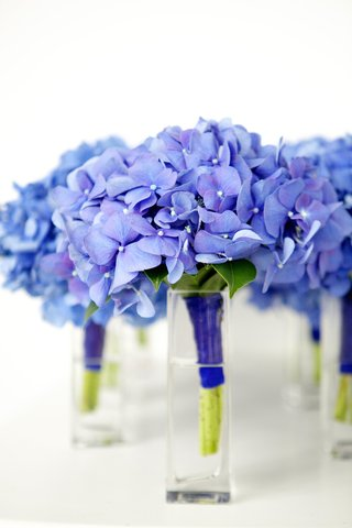 nosegays-of-blue-hydrangea-flowers-in-glass-vases