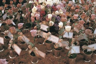 flower-pots-with-a-single-flower-and-card