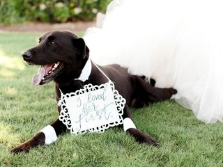 dog-at-wedding-pet-wearing-cuffs-and-collar-with-i-loved-her-first-sign-around-neck-wedding-day