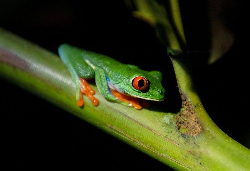 ORIGINS Luxury Lodge - Tree Frog on Nature Tour