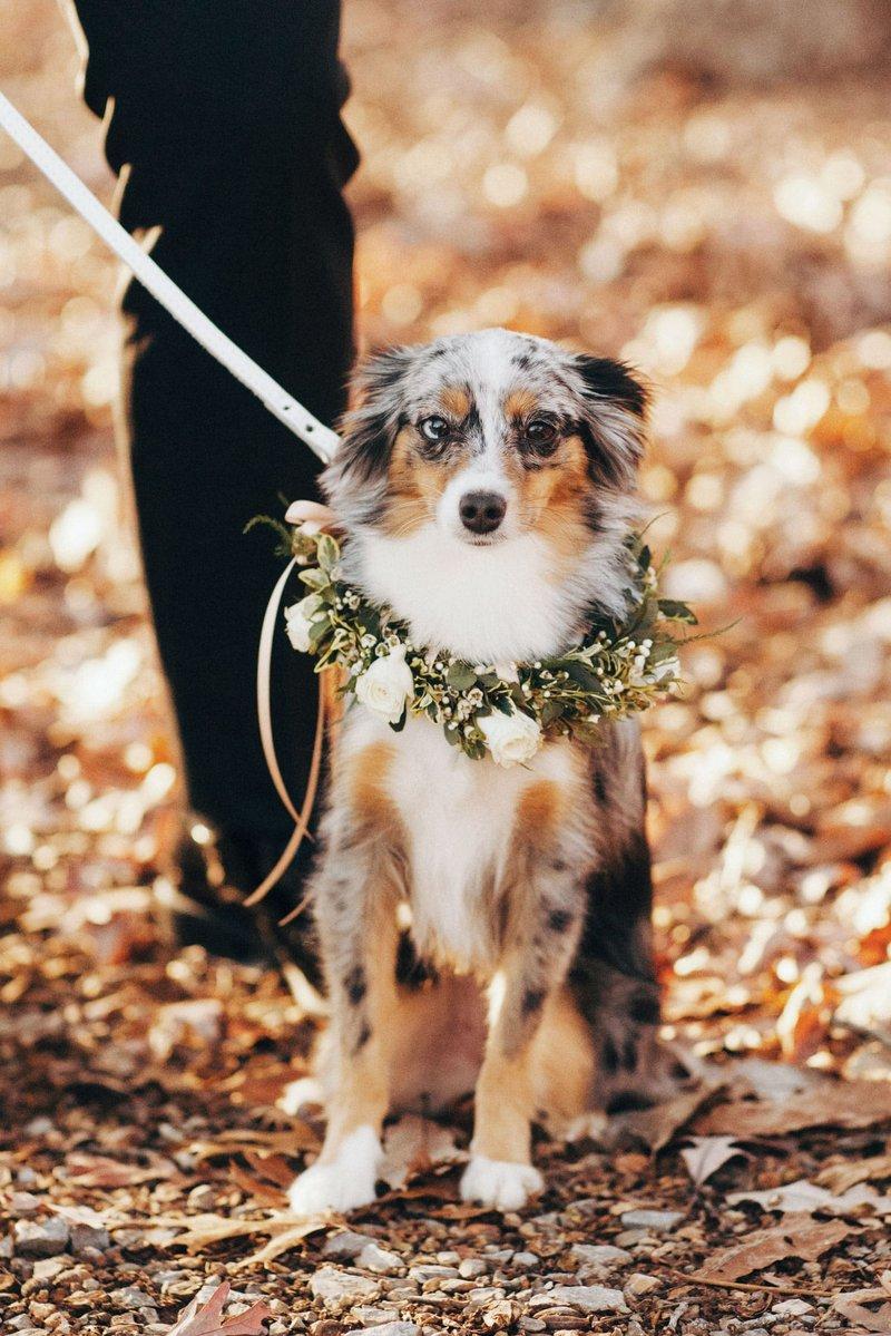 Corey Seager & Madisyn Van Ham's Dog