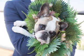 wedding-portrait-of-bride-groom-dog-french-bulldog-with-flower-crown-halo-greenery-pink-flowers
