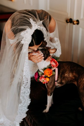 bride in lace trim wedding veil pronovias kissing dog with pink orange flower collar ranunculus
