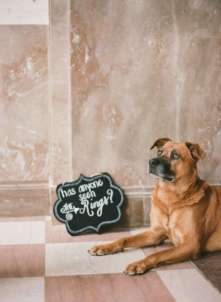 wedding-ceremony-dog-tan-brown-with-die-cut-sign-chalkboard-has-anyone-seen-the-rings