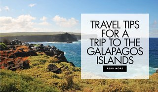 travel-tips-for-a-honeymoon-vacation-to-the-galapagos-islands-travel-advice-and-suggestions-review