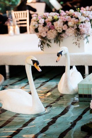 swans swimming in reflecting pool at four seasons hotel los angeles at beverly hills romantic ceremony