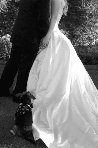 black-and-white-photo-of-small-dog-ring-bearer
