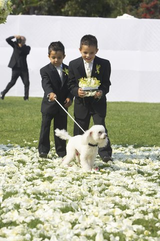 little-boys-in-suits-and-white-poodle-in-grass