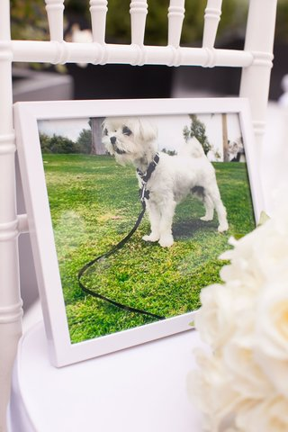 framed-photo-of-couples-dog-on-white-ceremony-chair-since-he-could-not-attend