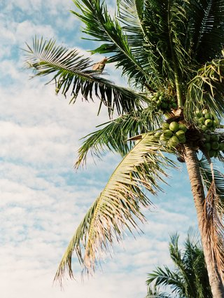 palm-tree-with-green-coconut-blue-sky-white-clouds