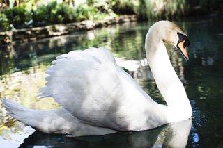 live-swans-at-courtney-bingham-and-nikki-sixx-wedding