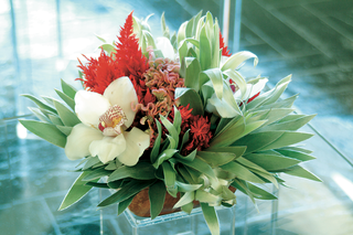palm-fronds-coxcomb-saffron-and-orchids