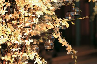 birch-trees-with-orchids-and-lanterns