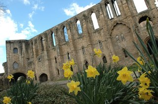 scotland-castle-with-yellow-daffodils-in-foreground