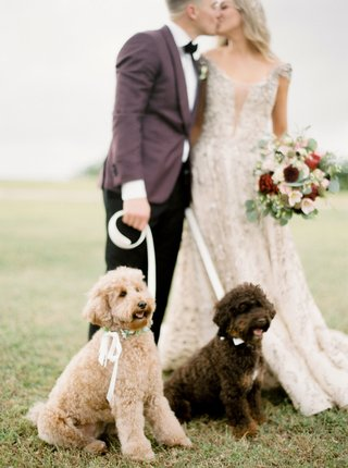 kike-hernandez-and-mariana-vicente-with-dogs-arizona-red-mini-goldendoodle-bruce-mini-aussie-doodle