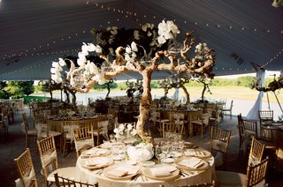 treelike-centerpiece-of-grapewood-and-orchids