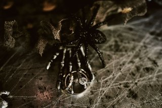 wedding-engagement-ring-and-band-with-spider-skeleton-hand-cobweb-halloween-wedding-ideas