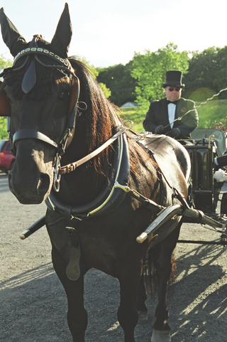 dark-brown-horse-and-carriage-driver