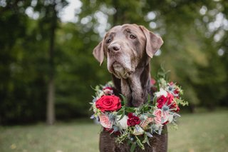 wedding-ideas-chocolate-lab-with-flower-wreath-red-pink-flowers-greenery-thistle