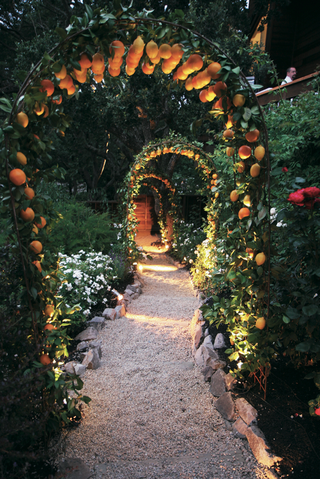 wedding-arch-with-lemons-and-oranges