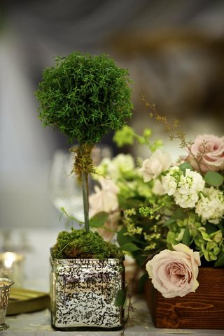 square-vase-filled-with-moss-and-small-treelike-plant