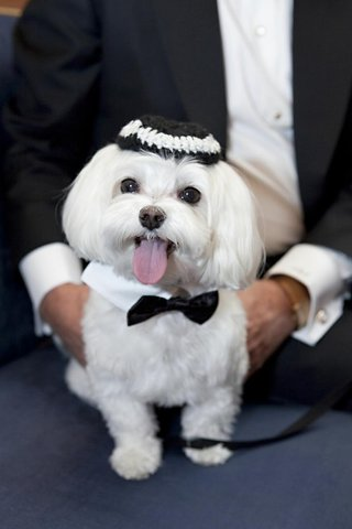jewish-dog-wearing-yarmulke-and-bow-tie