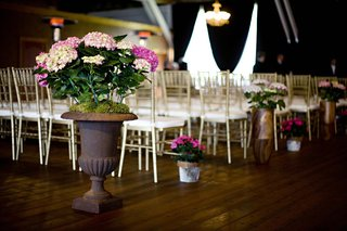 pink-hydrangeas-planted-in-clay-pot