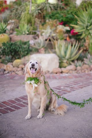 pet-in-wedding-with-garland-of-leaves-as-leash