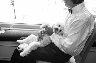 black-and-white-photo-of-puppy-lying-in-father-of-the-bride-lap