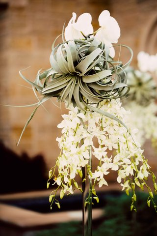 air-plant-with-white-dendrobium-and-phalaenopsis-orchids