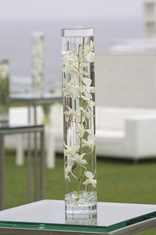 orchid-plant-submerged-in-water-in-tall-glass-vase