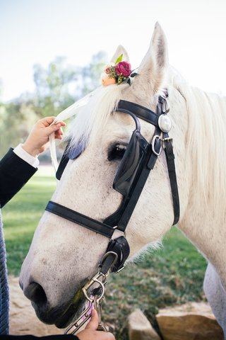brides-white-horse-with-pastel-orange-and-red-roses-greenery-on-head-for-outdoor-bohemian-wedding