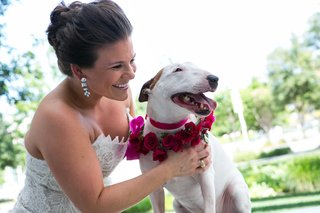 a-smiling-bride-cuddles-her-miniature-bull-terrier-dog-wearing-pink-floral-collar