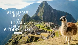 renting-therapy-llamas-alpacas-wedding-mtn-peaks-non-profit-unique-entertainment-animals-therapy