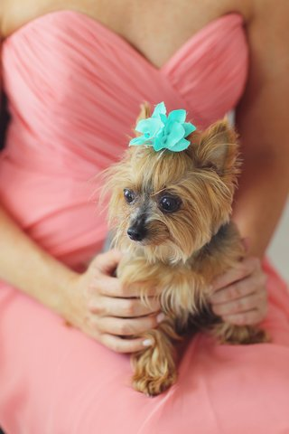 small-brown-yorkie-wearing-a-mint-flower-is-part-of-the-wedding-party