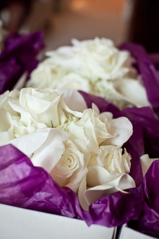 roses-in-boxes-with-purple-wrapping-paper