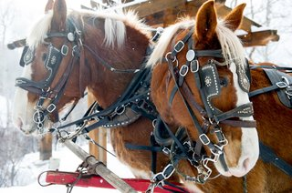 horse-drawn-carriage-transportation-for-outdoor-winter-snowy-wedding