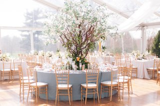 dogwood-tree-wedding-centerpiece-blue-linen-gold-chairs-clear-top-tent-greenhouse-design