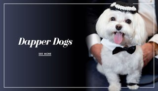 dog-in-wedding-photos-from-real-weddings