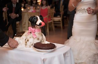 grooms-cake-made-to-look-like-his-jack-russell-terrier-as-a-surprise-to-him